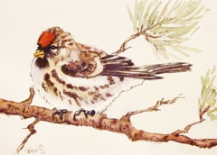 Return of the Redpolls